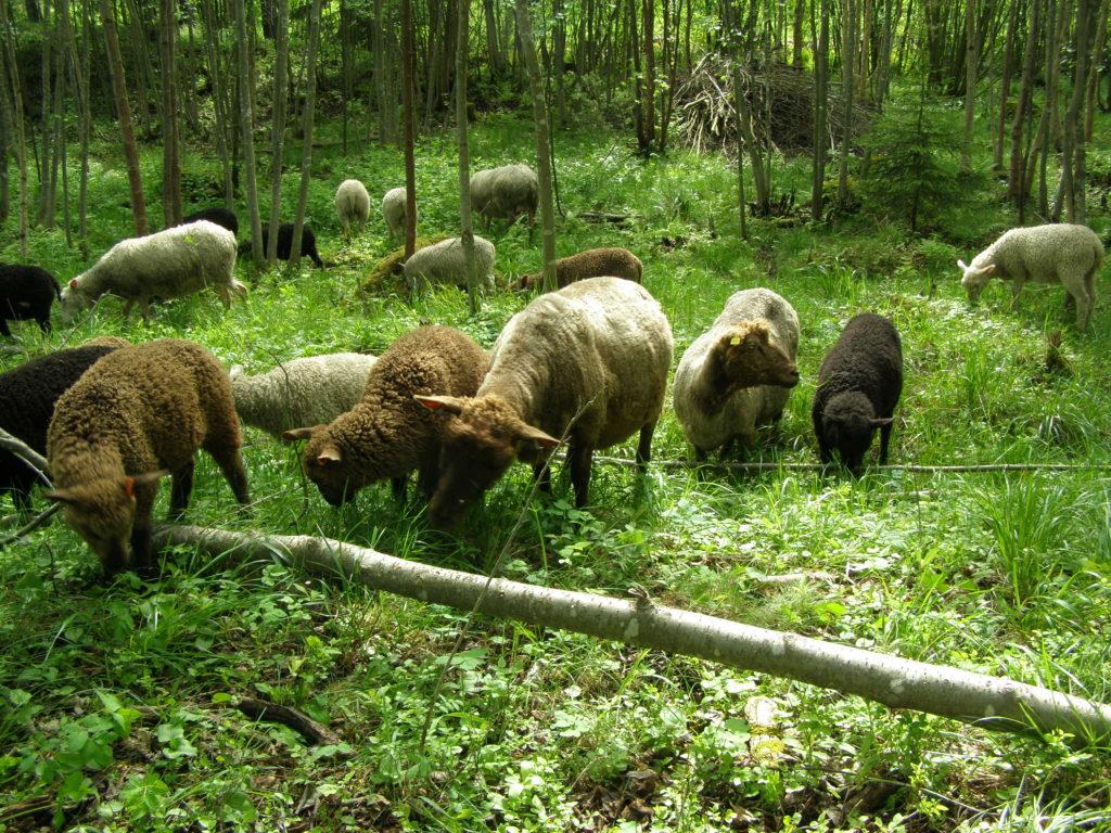 Lammastila niitty